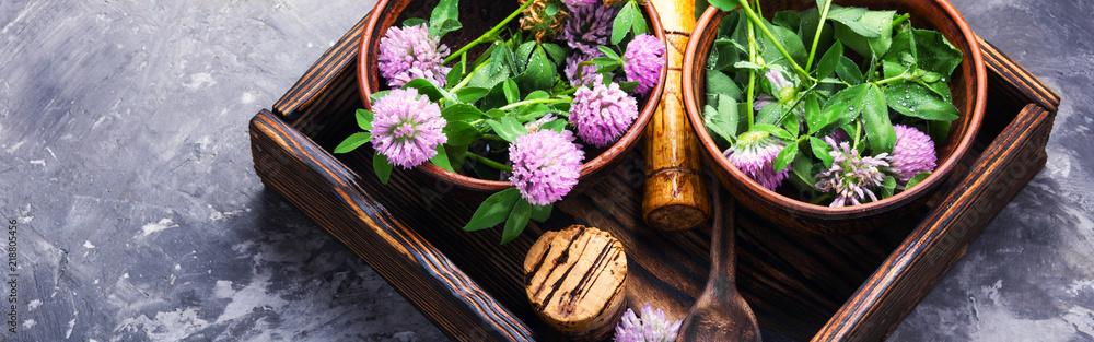 Photo  Healing plant clover