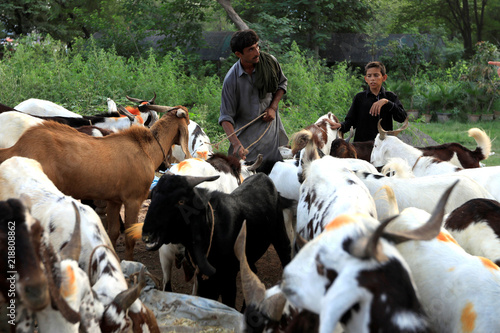 Man wait for customers to sell goats at a cattle market ahead of the