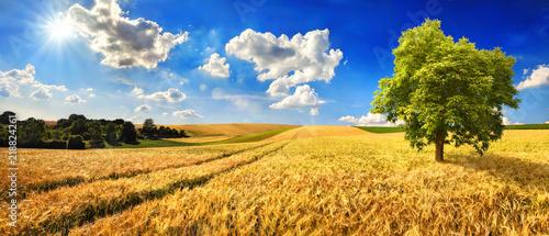 Goldenes weites Feld an einem schönen Tag