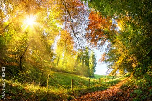Foto op Canvas Herfst Colorful autumn wonderland