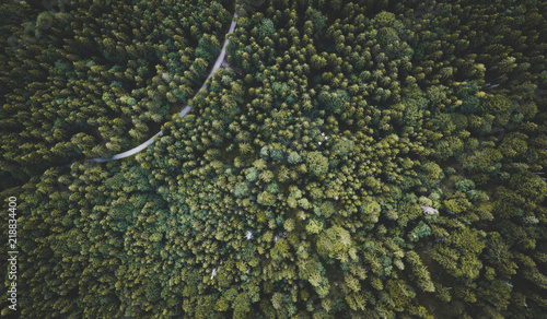 High Above a Forest in an Alpine Landscape