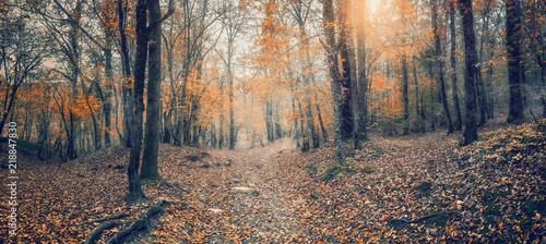 Foto op Aluminium Zalm Дорога в осеннем лесу.Осенний лиственный лес на Кавказе, Краснодарский край, Россия
