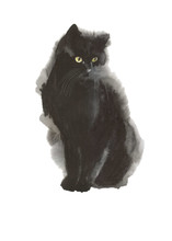 Black Cat Wild Animal In A Wat...