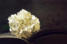 Condolence Card. White Snowbal...