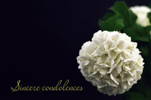 Sincere Condolences. Condolenc...