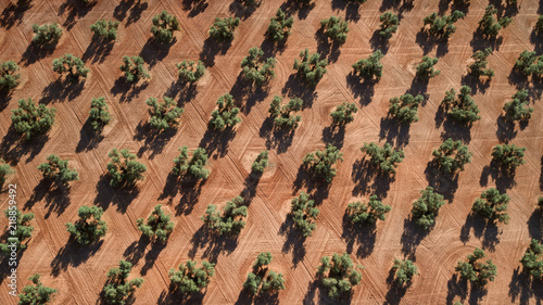 La pose en embrasure Oliviers aerial view of olive trees in Andalusia