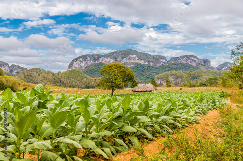 A typical view in Vinales Valley in Cuba. Wallpaper Mural