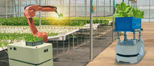 Iot Smart Agriculture Industry 4.0 Concept. Smart Robotic In Agriculture Futuristic , Robot Farmers (automation) Programmed To Work In The Indoor Farm For Increase Efficiency Growing A Seed,harvesting