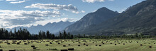 Panorama Of Hay Field And Cana...