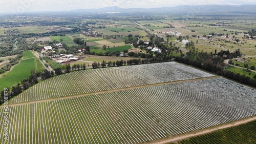 Tuinposter Lavendel created by dji camera, aerial vineyard and greenhouse construction
