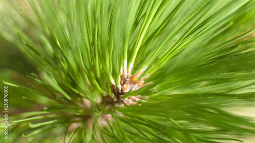 Close up of Pine Tree Branch D Shadow Depth of Field Nature Summer 2018 England