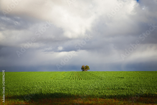 Poster Donkergrijs Australian countryside landscape sunny green fields farm land with clouds