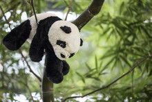 Panda With A Bamboo Branch. Toy Isolated