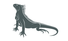 Iguana Graphic Icon. Iguana Gr...