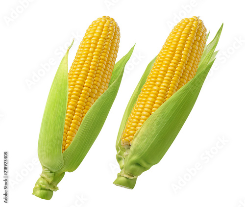 Fototapeta Raw corn cobs with green leaves isolated on white background