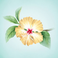 Fototapeta Egzotyczne Watercolor illustration of hibiscus flower