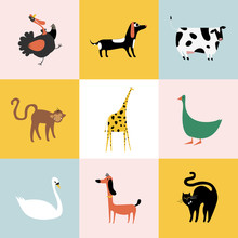 Collage Of Different Kinds Of Animals