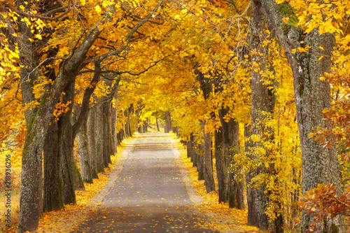 In de dag Herfst Beautiful, colorful autumn road. Pomerania, Poland
