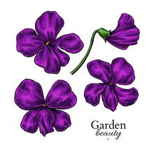 Violet Flower Drawing. Vector Hand Drawn Floral Set. Viola Sketch.