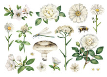 Watercolor Summer Illustrations Of Flowers And Insects