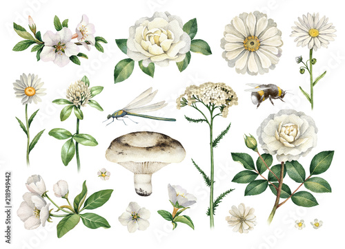 Stampa su Tela Watercolor summer illustrations of flowers and insects