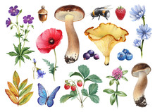 Watercolor Illustrations Of Flowers, Berries, Mushrooms And Insects