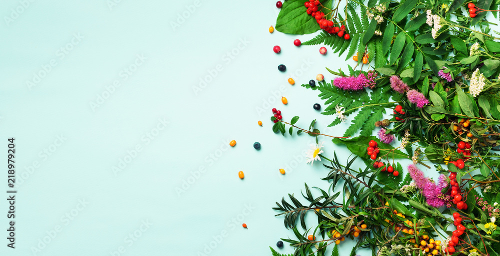Fototapety, obrazy: Ingredients of herbal alternative medicine, holistic and naturopathy approach on blue background. Herbs, flowers for herbal tea. Top view, copy space, flat lay