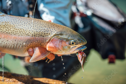 Fotobehang Fly Fishing for Trout