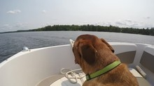 4k Dog Enjoys Boat Ride