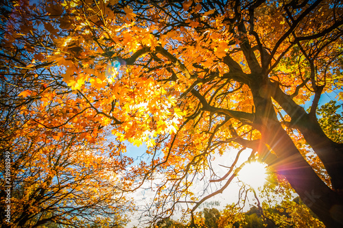 Photo Beautiful, autumnal background with canopy of leaves and branches