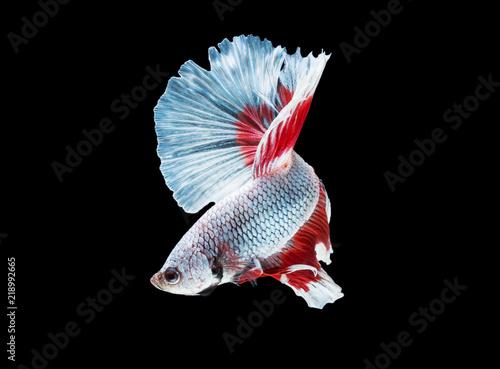 Obraz na dibondzie (fotoboard) Piękna bój ryba na czarnym tle z ścinek ścieżką