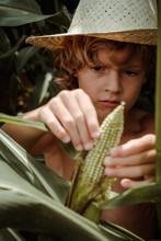 Boy Holding Corn In Cornfield