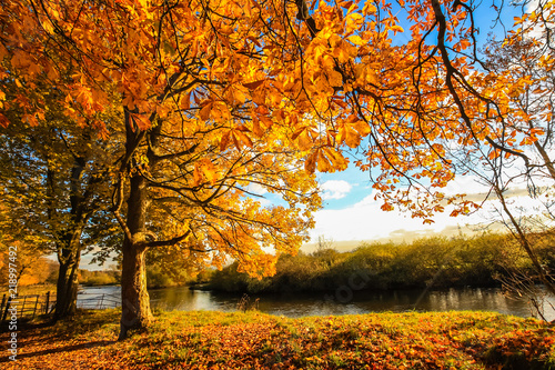 Foto op Canvas Herfst Beautiful, golden autumn scenery with trees and golden leaves in the sunshine in Scotland
