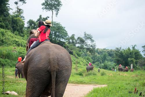 Plakat Słonia trekking Grupowi turyści jadą podróż przez dżungli w lasowym Chiang mai, Thailand