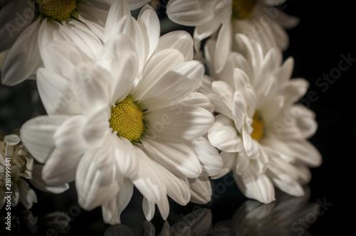 Fototapeta daisy obraz na płótnie