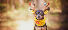 Dogs In Deer Costume, Autumn M...