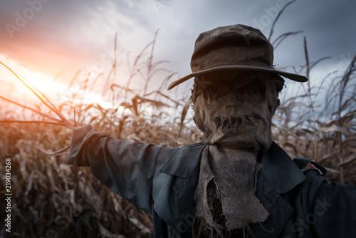 Obraz na plátně Scary scarecrow in a hat on a cornfield in orange sunset background