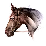 painted colored of an animal horse side - 219040090