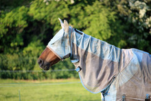 Horse With Fly Rug And Mask