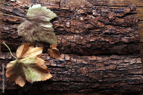 Valokuva  Herbst                                                                     ft810