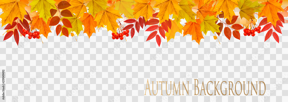 Fototapety, obrazy: Abstract autumn panorama with colorful leaves on transparent background Vector