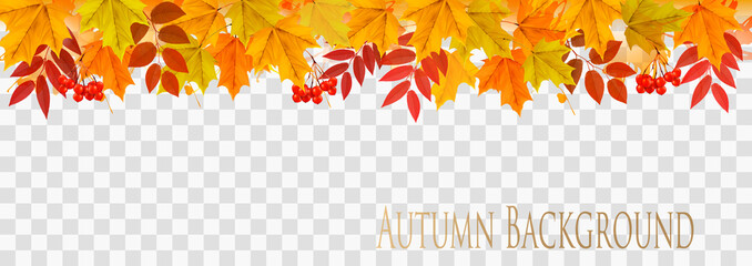 Abstract autumn panorama with colorful leaves on transparent background Vector
