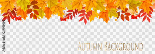 Fototapeta Abstract autumn panorama with colorful leaves on transparent background Vector obraz