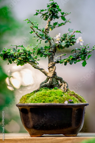 Fotobehang Bonsai Backgrounds, seedlings in the plant pots (ornamental plants for garden decoration) for decorating the home and restaurant to refreshing customers.