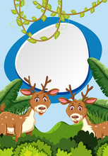 Deers In Woods With Frame Conc...