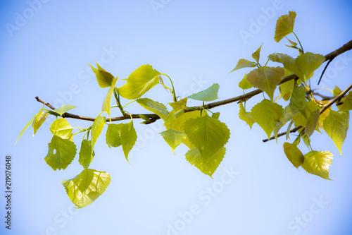 Fotografia  Twig against the sky