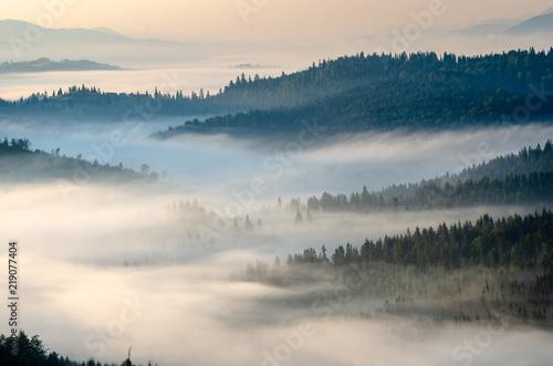 Fototapeten Wald Ukrainian fairy tale