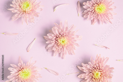 Fotobehang Bloemen Pink chrysanthemums arrangement on pink background. Flat lay, top view. Floral background.