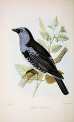 Plakat Illustration of birds.