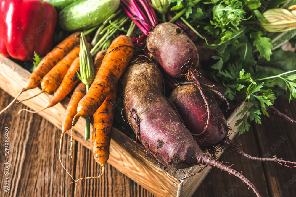 Fototapety, obrazy: Bio food. Garden produce and harvested vegetable. Fresh farm vegetables in wooden box. Carrots and beets.